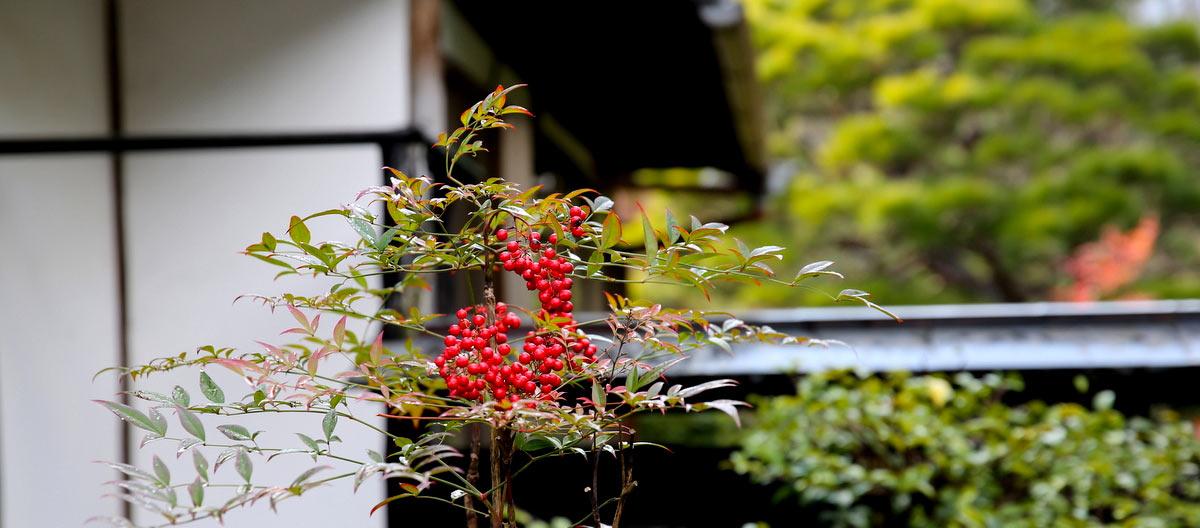 Совершенство сада Tenryu-ji, Kyoto