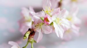 Приближаем весну