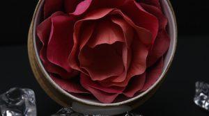 Роза Laduree