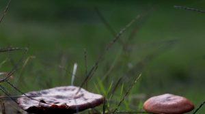 Осень на душе